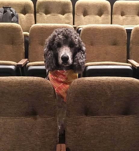 Dogilike.com :: น่ารัก! แก๊งสุนัขช่วยเหลือบุกโรงละคร ฝึกสมาธิไม่วอกแวกต่อสิ่งเร้า
