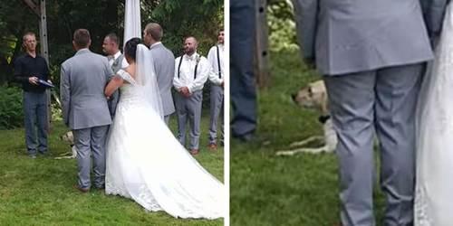 Dogilike.com :: คลิปนาทีเจ้าตูบร่วมเต้นรำกับคู่บ่าวสาว น่ารักจนคนดูนับ 1 ล้านวิว!