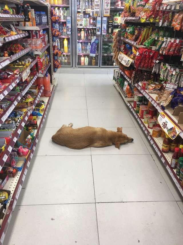 Dogilike.com :: น่ารัก! ร้านสะดวกซื้อเปิดประตูต้อนรับน้องหมาในวันที่อากาศร้อนจัด