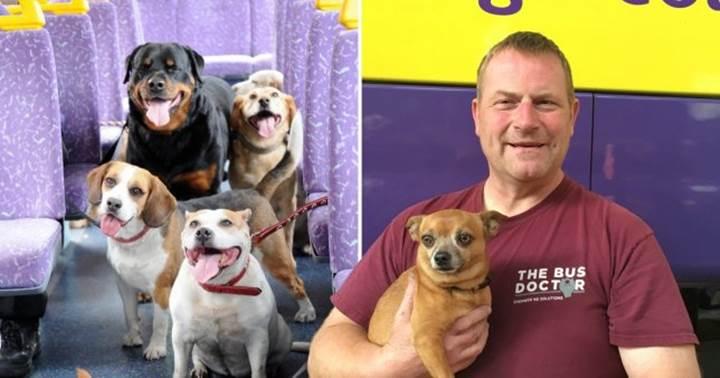Dogilike.com :: เจ๋ง! อังกฤษมีบริการรถบัสพิเศษเพื่อเจ้าตูบ กระตุ้นให้เจ้าของพาหมาออกเที่ยว!