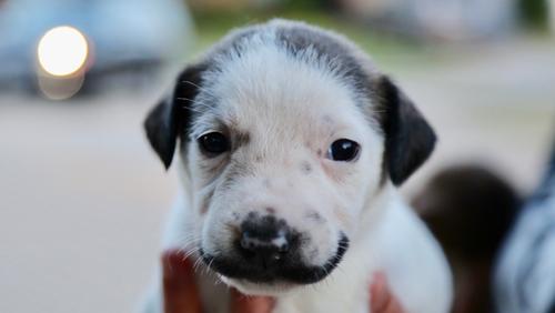 Dogilike.com :: มะกันประกาศหาบ้านให้ลูกหมาฮิปสเตอร์ หน้าหนวด สุดน่ารัก !