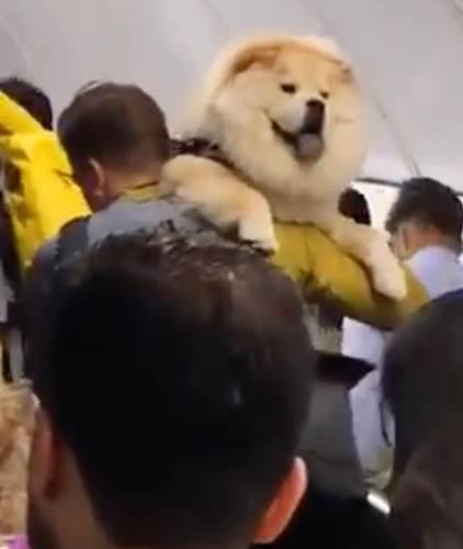 Dogilike.com :: รถไฟใต้ดินสัญญาณเตือนภัยดัง ผู้คนพากันหนีแต่ชายคนหนึ่งกลับทำแบบนี้!(คลิป)