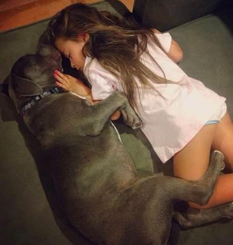Dogilike.com :: เผยเรื่องราวน่ารัก พิทบูลฯ ขี้อ้อนติดหนูน้อย ไม่อยู่ใกล้ๆ นอนไม่หลับ!