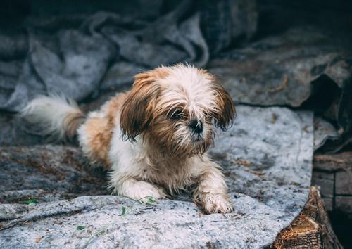 Dogilike.com :: จัดอันดับ 5 เรื่องชวนปวดหัวที่เจ้าของหมาต้องเจอในวันฝนตก