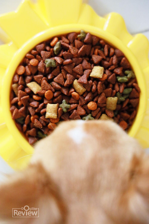 Dogilike.com :: หอม กรอบ อร่อย ถูกใจพันธุ์เล็กด้วยเพดดิกรี มินิ !!