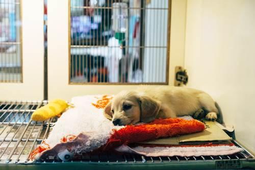 Dogilike.com :: 3 พฤติกรรมเจ้าของ เสี่ยงทำให้น้องหมาเป็นโรคผิวหนัง !