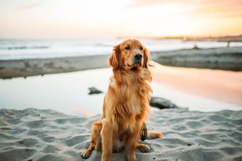 Dogilike.com :: ฝนตกบ่อยต้องระวัง! สายพันธุ์น้องหมาที่มักพบปัญหาโรคผิวหนัง