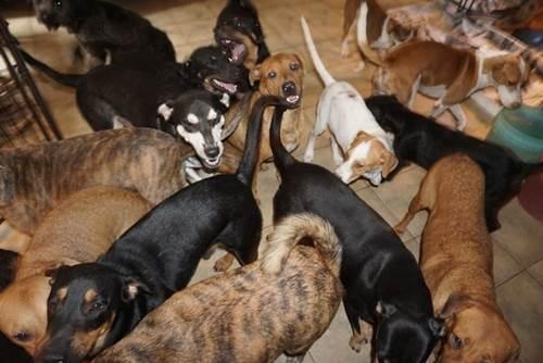Dogilike.com :: Chella หญิงสาวเพียงผู้เดียวที่ช่วยสุนัข 97 ตัวจากพายุเฮอริเคนดอเรียน!