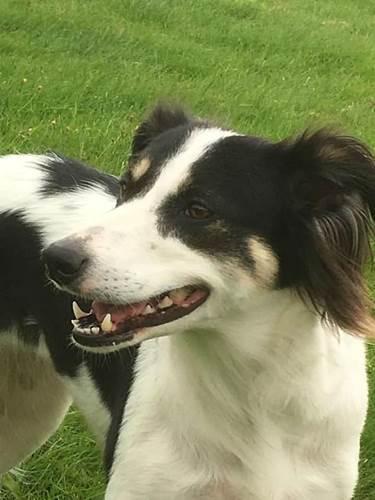 Dogilike.com :: อย่าให้กระดูกกับสุนัข! อุทาหรณ์เจ้าของชอบให้กระดูกวัวแทะเล่น