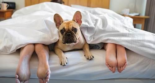Dogilike.com :: เผยการทดสอบ ให้สุนัขอยู่ในห้องนอนทำให้เจ้าของนอนหลับดีขึ้น !