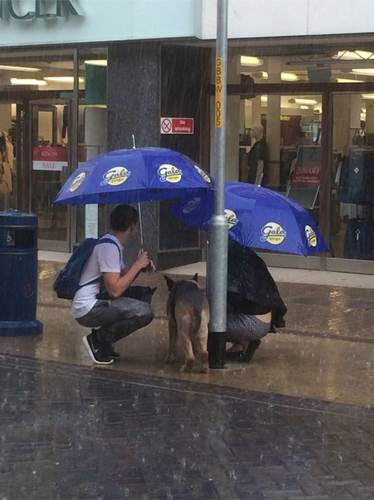 Dogilike.com :: ดูแล้วอมยิ้ม! คู่รักเห็นตูบถูกล่ามในวันฝนตกเลยตัดสินใจทำแบบนี้
