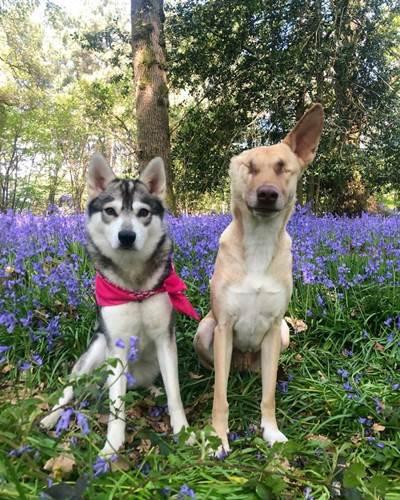 Dogilike.com :: ตูบใจสู้! จากถูกทารุณจนตาบอด วันนี้เป็นน้องหมาบำบัดช่วยผู้คน