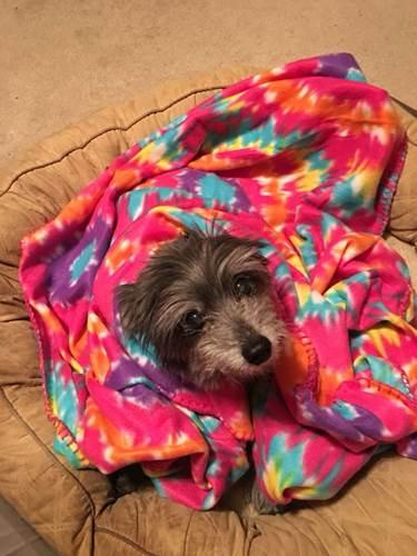 Dogilike.com :: สาวอุปการะตูบเหมือนตัวที่เคยเลี้ยงตอนเด็ก จนรู้ว่าเป็นตัวเดียวกัน !