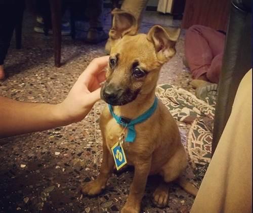 Dogilike.com :: สคูบี้-ดู ครบรอบ 50 ปี! เจ้าของแห่โพสต์ภาพน้องหมาหน้าเหมือน