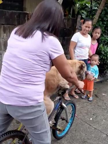 Dogilike.com :: รักสุดใจ! คลิปสุนัขซื่อสัตย์ร่ำลาเจ้าของเป็นครั้งสุดท้าย