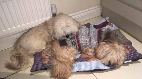 Dogilike.com :: เจ้าของโพสต์ภาพเจ้าตูบคิดถึงเพื่อน ยังคงเว้นที่นอนเอาไว้ให้เสมอ !