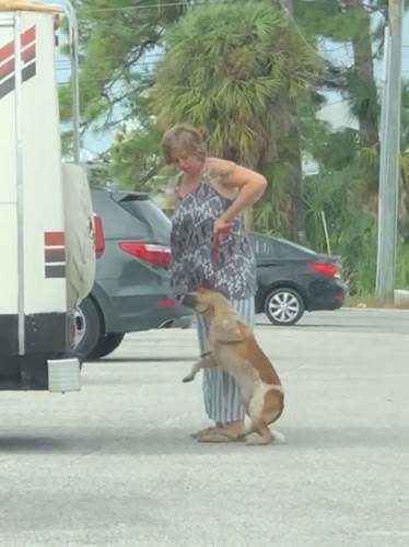Dogilike.com :: สาวเตะสุนัข-ดึงคอจนตัวลอย ถูกตำรวจจับกลับบอกว่า กำลังฝึกตูบอยู่ !