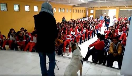 Dogilike.com :: โรงเรียนมีโชว์เป่าแซกโซโฟน ตูบไม่ได้รับเชิญเดินขึ้นเวทีแล้วทำแบบนี้