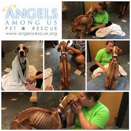 Dogilike.com :: ช็อก! พบเจ้าตูบผอมโซหนังติดกระดูก ถูกล่ามทิ้งลำพังข้างโบสถ์ที่สหรัฐฯ