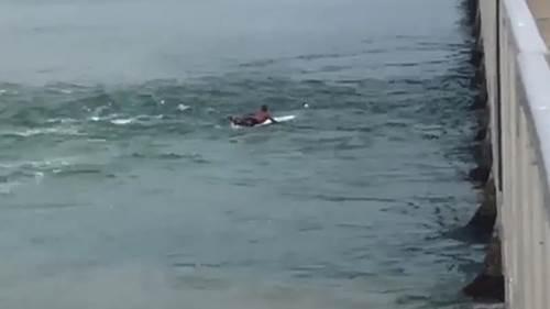 Dogilike.com :: นาทีชีวิต! หนุ่มออสซี่หยิบเซิร์ฟบอร์ดคู่ใจ โต้คลื่นแรงช่วยสุนัขตกน้ำ