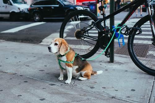 Dogilike.com :: จัดอันดับ 5 สายพันธุ์น้องหมาที่เจ้าของชอบ(ไม่ควร)เลี้ยงจนอ้วน !