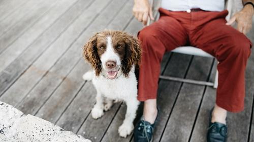 Dogilike.com :: จัดอันดับ 5 สายพันธุ์น้องหมาใจดี เหมาะเลี้ยงเป็นเพื่อนเด็กๆ !