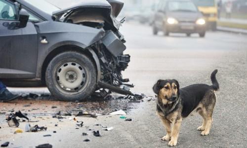 Dogilike.com :: 5 สถานการณ์ฉุกเฉินรีบพาหมาหาหมอด่วน ไม่ต้องรอถามโซเชียล !