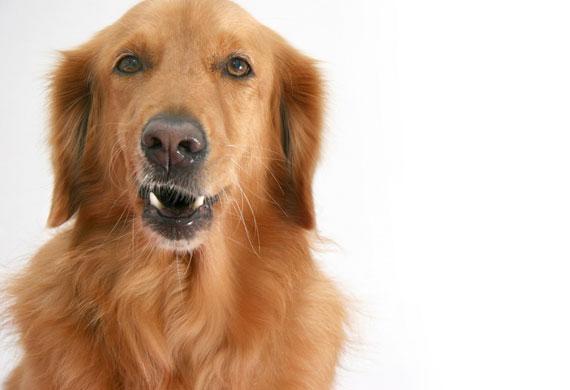 Dogilike.com :: สุนัขแบบไหนเสี่ยงป่วยเป็นโรคไตวาย