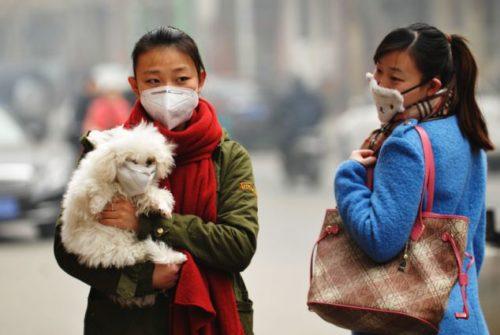 Dogilike.com :: ย้อนรอย 100 ปี สุนัขกับหน้ากากป้องกันมลพิษ (รูปเยอะ)