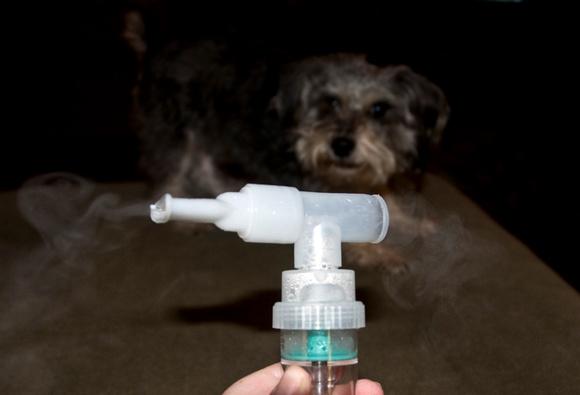 Dogilike.com :: เจ้าของต้องรู้! ... วิธีรับมือโรคท่อลมตีบในสุนัข