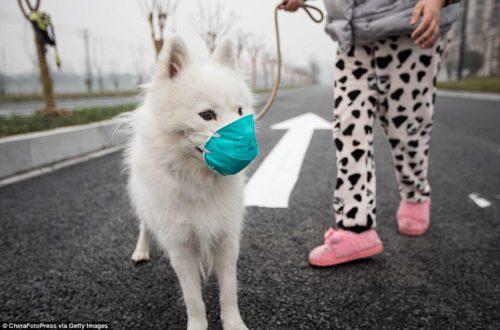 Dogilike.com :: ผลวิจัยชี้ มลพิษในบ้าน(อาจ)ทำคนและสุนัขเสื่อมสมรรถภาพทางเพศได้