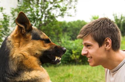 Dogilike.com :: จริงหรือไม่! สุนัขมีพฤติกรรมเปลี่ยนแปลงเป็นเหมือนกับคนเลี้ยงได้