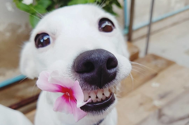 Dogilike.com :: สงสัยจัง การขูดหินปูนในสุนัขทำไมต้องวางยาสลบ ?