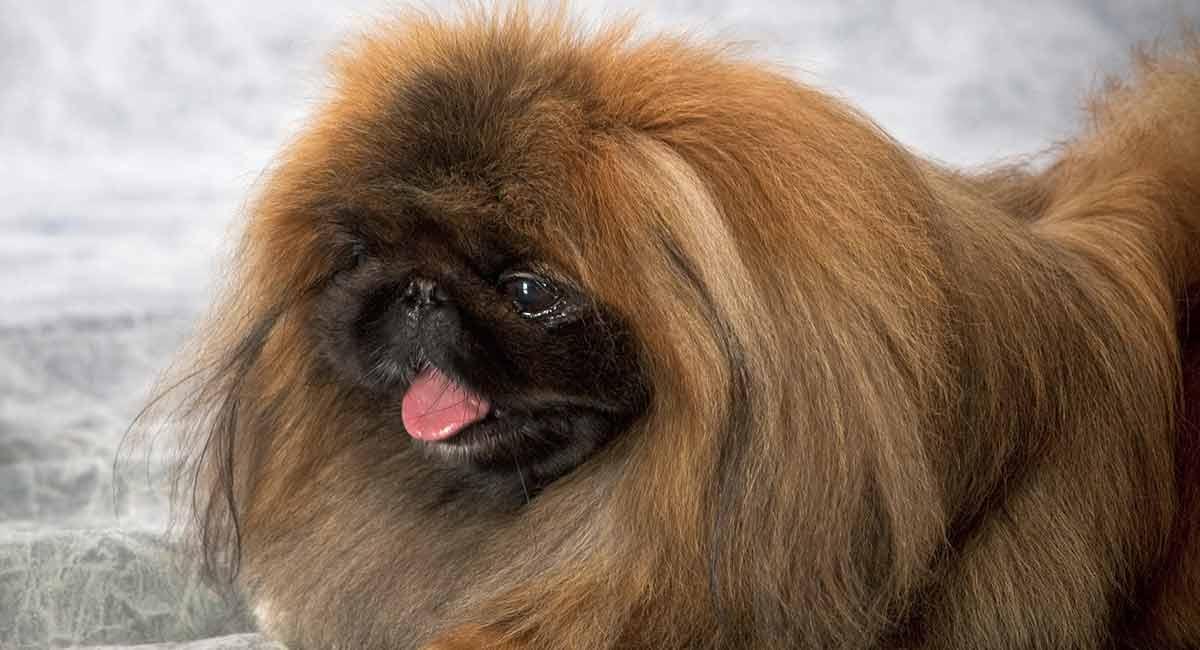 Dogilike.com :: 10 สายพันธุ์น้องหมากับฉายาสุดว้าว..แบบนี้ก็ได้หรอ