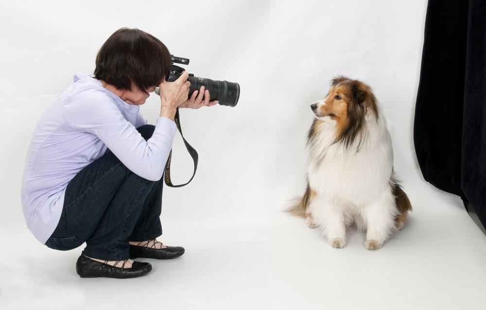 Dogilike.com :: 5 อาชีพสุดแนวเอาใจคนรักสุนัข