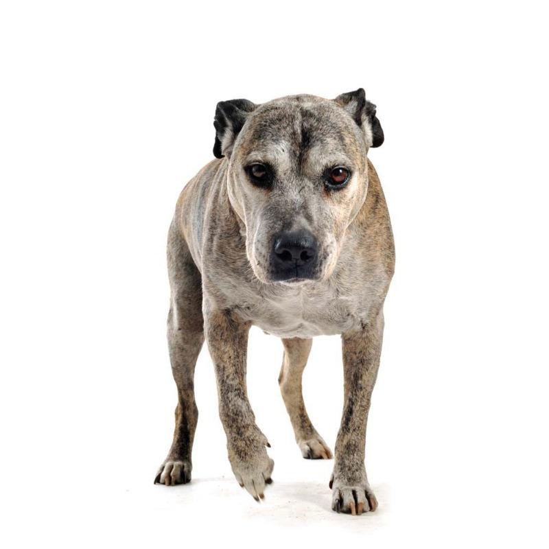 Dogilike.com :: เลี้ยงสุนัขแบบไหน เสี่ยงเป็นโรคข้อเสื่อมไวมากกว่า