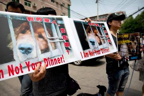 Dogilike.com :: เทศกาลกินเนื้อหมาแห่งเมืองหยู่หลิน งานที่คนทั้งโลกต่อต้าน