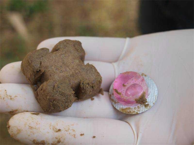 Dogilike.com :: วัคซีนพิษสุนัขบ้ารูปแบบกิน ช่วยป้องกันโรคในสุนัขได้จริงหรือ ?