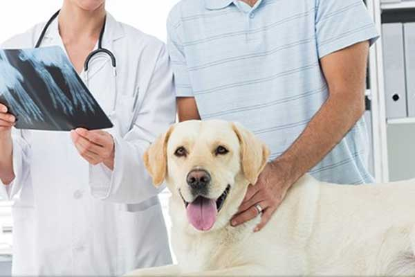 Dogilike.com :: รู้ก่อนพาน้องหมาไปหาหมอ ค่ารักษาและบริการในสถานพยาบาลสัตว์