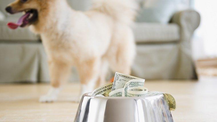 Dogilike.com :: ธนบัตรที่น้องหมาทำขาด แลกคืนอย่างไรได้บ้าง