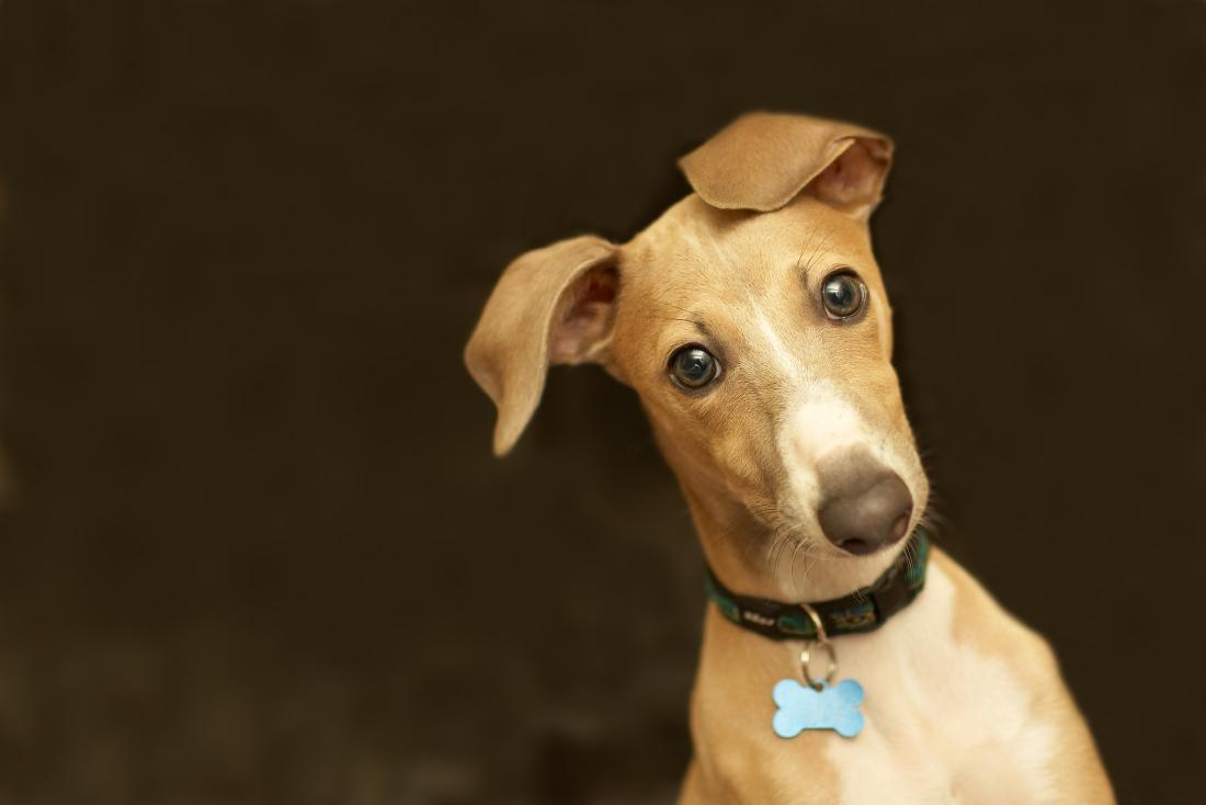 Dogilike.com :: สุนัขสามารถป่วยเป็นโรควัณโรคได้หรือไม่ ?