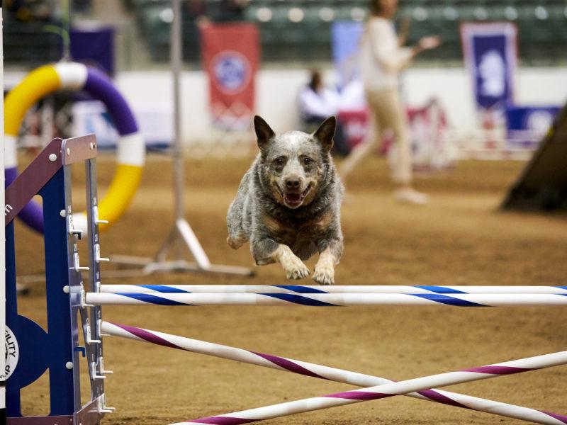 Dogilike.com :: 5 สุดยอดกีฬาสำหรับสุนัขน่าสนใจไปแข่งกัน