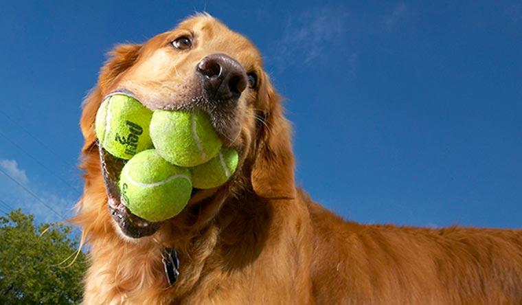 Dogilike.com :: 10 เรื่องมหัศจรรย์ของน้องหมาที่เป็นสถิติโลก