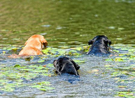Dogilike.com :: พิษจากสาหร่ายสีเขียวแกมน้ำเงิน (อาจ) ทำสุนัขถึงตายได้?