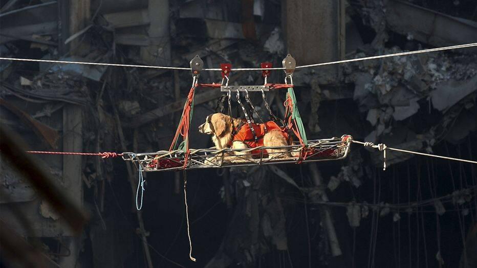 Dogilike.com :: 4 โศกนาฏกรรมสำคัญของโลกที่มีสุนัขร่วมชะตากรรมด้วย