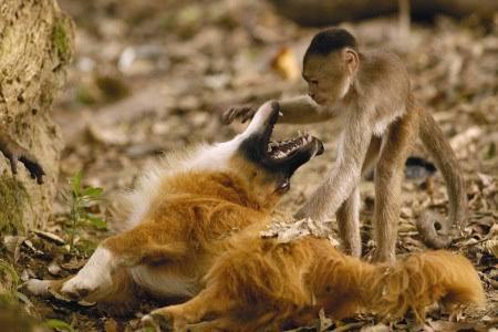 Dogilike.com :: 5 คู่ซี้ต่างสปีชีส์ สุนัขและเพื่อนรักต่างสายพันธุ์สุดแปลก