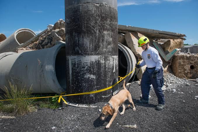 Dogilike.com :: ไขความลับ สัมผัสพิเศษที่น้องหมามีมากกว่ามนุษย์