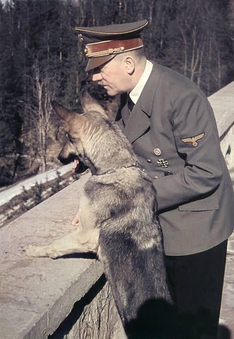 Dogilike.com :: โศกนาฏกรรมของ Blondi สุนัขตัวโปรดของฮิตเลอร์