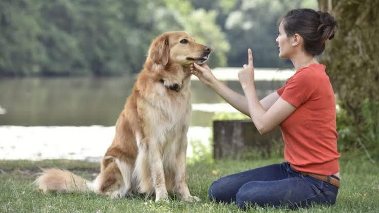 Dogilike.com :: เปรียบเทียบสำนวน มะหมา ในภาษาต่าง ๆ ทำไมถึงมองหมาในแง่ลบ