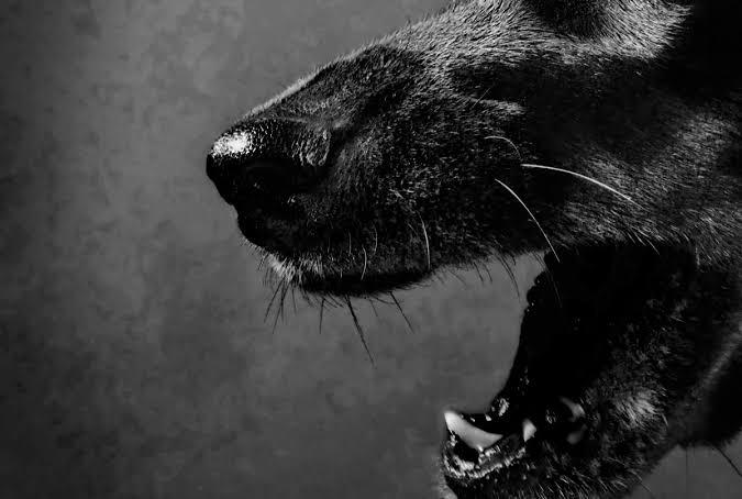 Dogilike.com :: โรคมะเร็งติดต่อทางระบบสืบพันธุ์ เซลล์ร้ายคร่าสุนัขมานานนับหมื่นปี